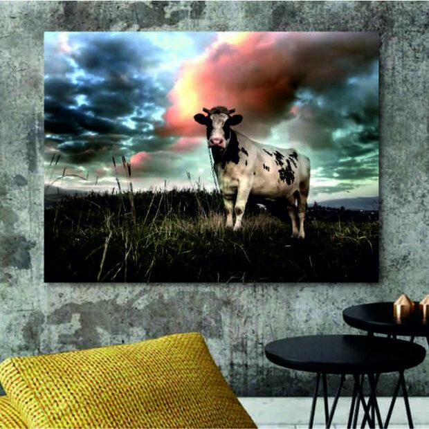 Koeien-op-canvas.jpg